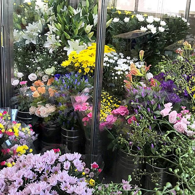 街の花や泉